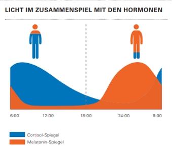 Hormondiagramm