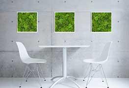 Pflanzenbild Impression 8