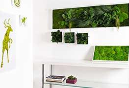 Pflanzenbild Impression 14