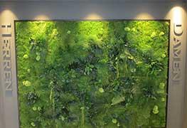 Pflanzenbild Impression 15